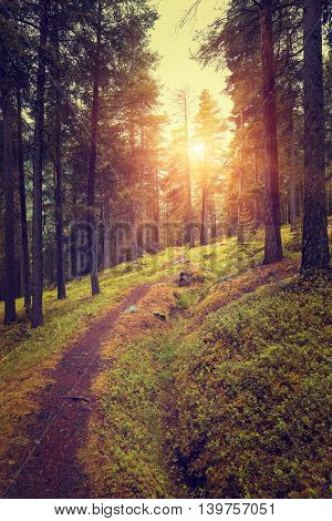 Beautiful Forest Sunset, Sunbeams. Norway