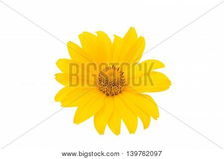 yellow flower daisy isolated on white background