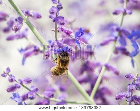 Bee pollinating garden flowers