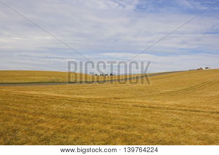 rolling golden barley fields with a disused farm in the yorkshire wolds in summer under a blue cloudy sky