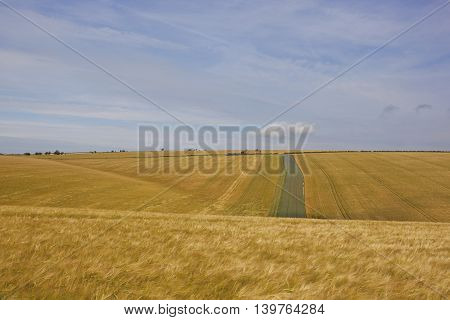 extensive golden barley crops with a disused farm in the yorkshire wolds under a blue cloudy sky in summer