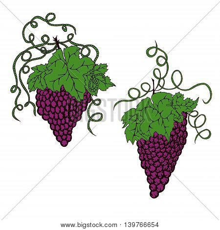 Hand drawn grapes illustration in doodle style.