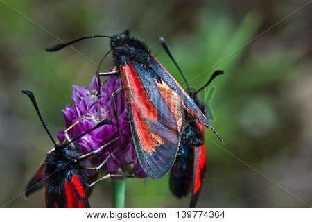 Butterfly With Brightly By Colored Wings.