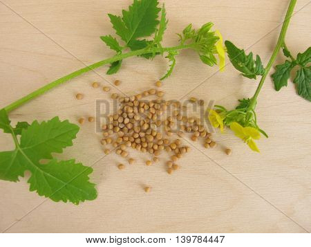 Flowering mustard and mustard seeds on wooden board