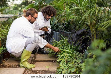 Male scientists inspecting plants at greenhouse