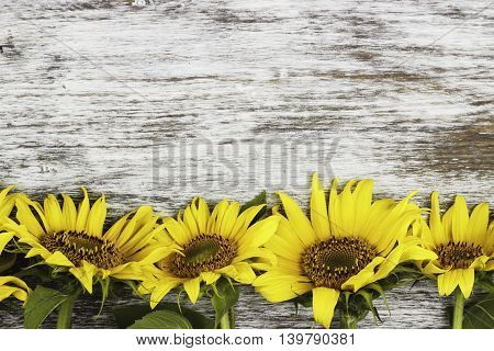 Bouquet Of Sunflowers On The Board