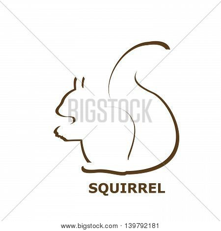 Illustration on a squirrel icon on white background