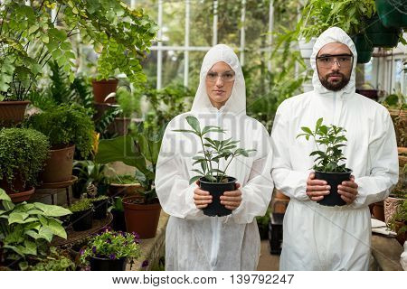 Portrait of male and female scientists in clean suit holding potted plants at greenhouse