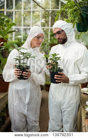 Scientists in clean suit examining potted plants at greenhouse