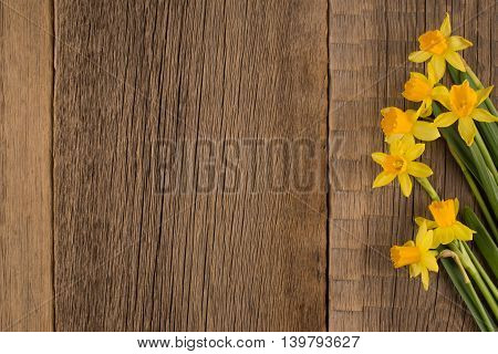 Daffodils on wooden background copy space.Daffodils on wooden background copy space