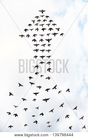 flock of birds forming an arrow abstract success concept