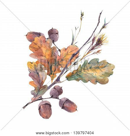 Watercolor autumn vintage bouquet of twigs, yellow oak leaves and acorns. Botanical watercolor illustrations. Greeting card. Isolated on white background