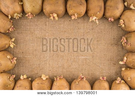 potato on burlap sack background. Natural canvas texture. Organic food. Backdrop for design.