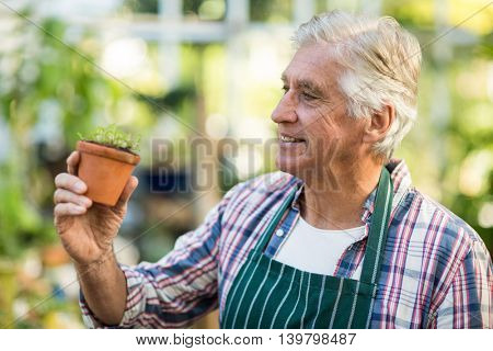 Close-up of happy male gardener examining sapling at greenhouse