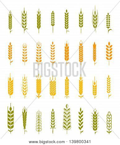 Set of simple and stylish Wheat Ears icons and design elements for beer, organic local farm fresh food, bakery themed design.