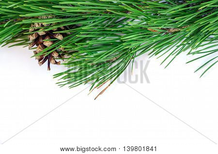 Green pine branches with cones on a white background