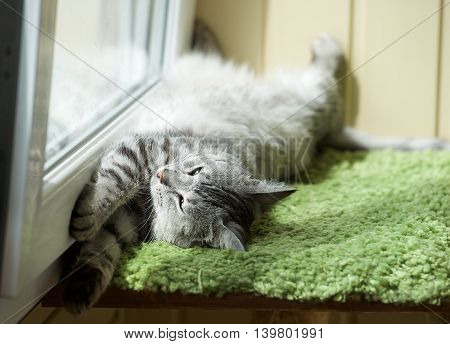 unny resting cat in the balcony on sunny hot summer day, sleepy cat, young kitten in the terrace, half sleepy cat with open eyes