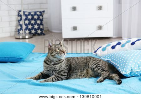 Cute cat relaxing on pillows