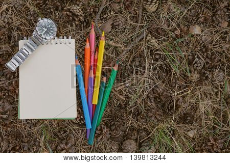 Color Pencil On Carpet Of Pine Needles