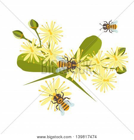 Honey bee with linden blossom vector. Bee healthy vector orange honeycomb linden blossom hexagon nature flowers. Beehive linden blossom gold pattern honey bee design shape organic hive linden blossom.