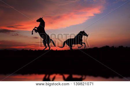 horse Evening light. dignified elegant Landscape love background