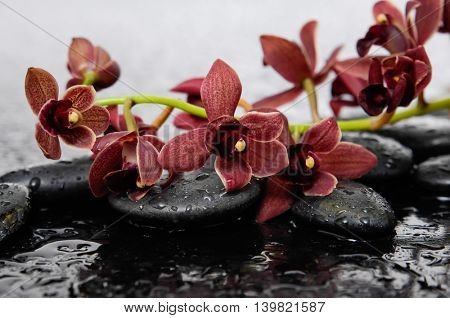 Set of branch orchid with therapy stones