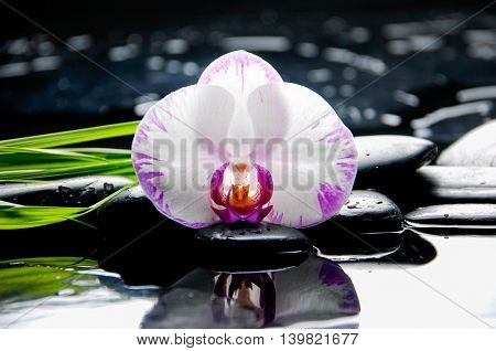bamboo leaf with orchid ,candle on wet background