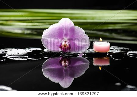 Green plant with orchid ,candle on wet background
