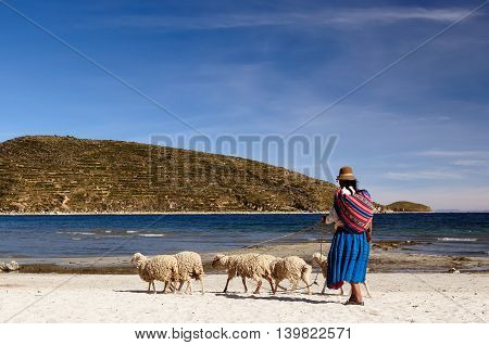 South America Bolivia - Isla del Sol on the Titicaca lake the largest highaltitude lake in the world. Ethnic woman is going through the lakeside for sheep pasturage
