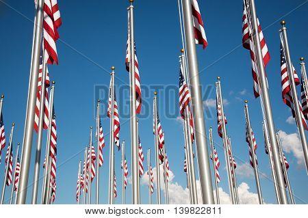 Many U.S. flags flying on flag poles.