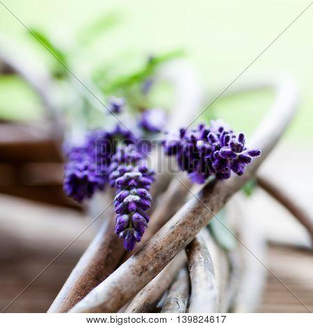 Fresh lavender blooming in summer