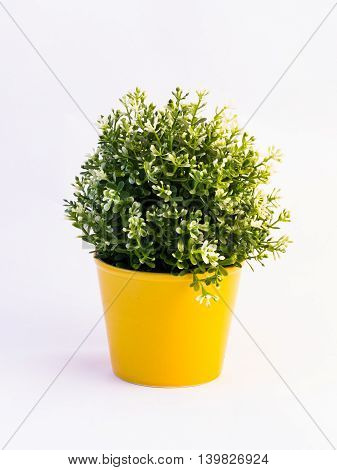 Green Plastic Flower In A Yellow Pot On White Background