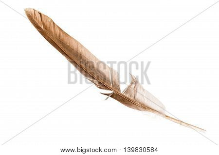 Beige Feather On White