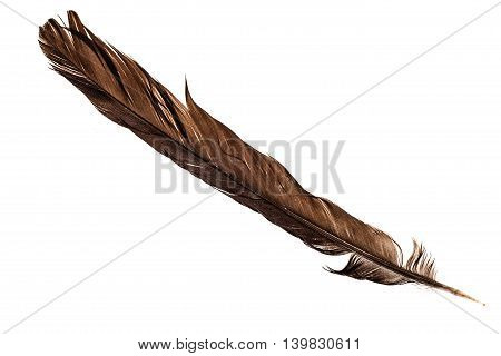 Brown Feather On White