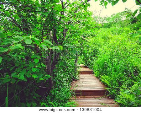 Wooden Path In The Green Forest. Kamchatka, Russia