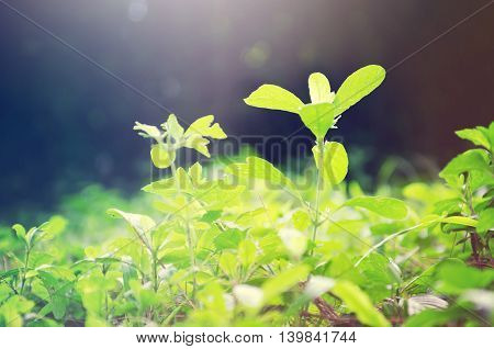 Focus View Of Plant Leaf In A Garden Filtered With Light