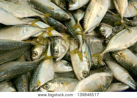 fresh mackerel fishes in local fish market