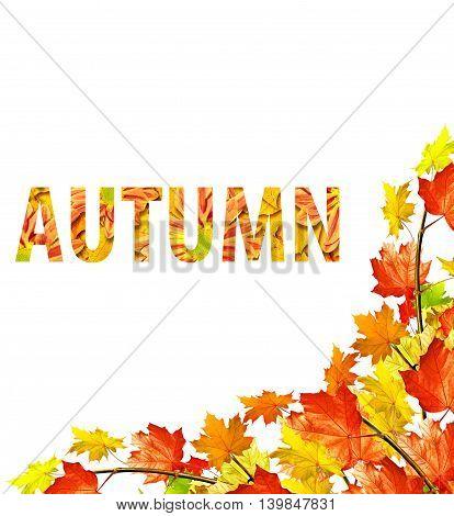 autumn leaves isolated on white background. foliage
