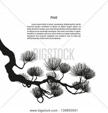 Black silhouette of pine branches on a white background. Vector illustration