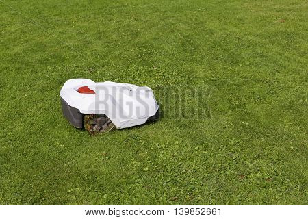 robotic lawn mower working on green grass