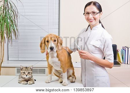 Vet measures the body temperature of a dog and kitten