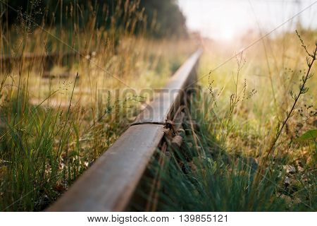 old rails lie in the grass at sunset in summer