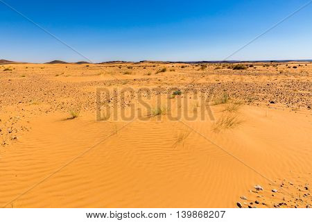 sand dune with grass in the Sahara desert, Morocco