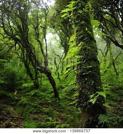 Deep jungle scenery in Nepal, near the Annapurna