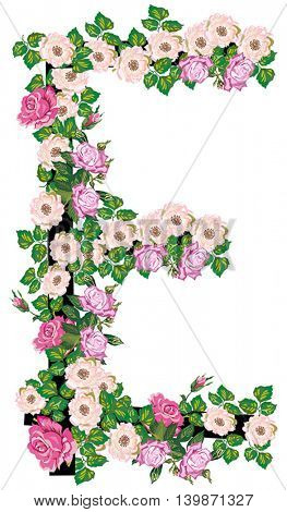 illustration with letter E from rose and brier flowers isolated on white background