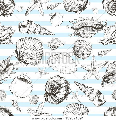 Vector seamless pattern of seashels. Hand drawn vintage engraved illustration of ocean underwater animals. Isolated on light blue strips.