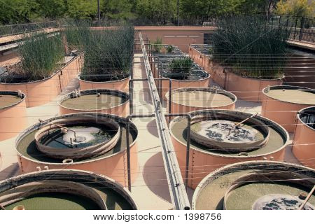 Water Reclaimation And Hydroponics