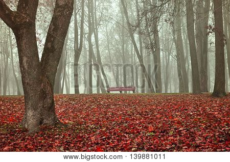 Wooden lonely bench under the bare trees in the autumn park in dense fog. Autumn landscape in cold vintage tones.