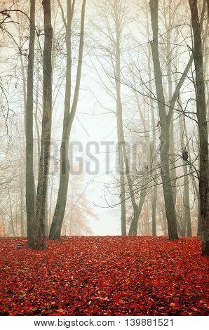 Foggy autumn landscape - autumn trees in the park in dense fog