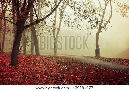 Autumn nature -misty autumn view of autumn park alley in dense fog - foggy autumn landscape with bare autumn trees and orange fallen leaves. Autumn alley in dense autumn fog. Vintage tones.